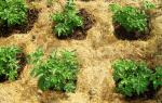 Как сделать почву плодородной на даче?