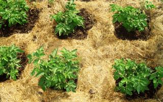 Как сделать землю плодородной на даче?