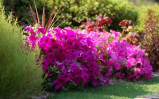 Цветы на дачном участке многолетники