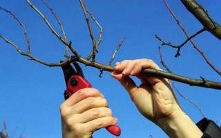 Кусторез аккумуляторный – выбираем подходящий вариант для сада