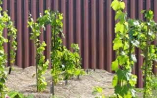 Место для винограда на дачном участке