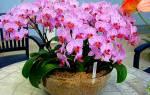 Чем удобрять орхидеи в домашних условиях чтобы цвели