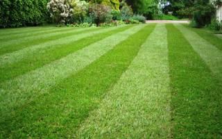 Как правильно засеять газонную траву на даче?