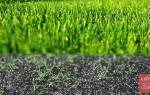 Как посадить газон своими руками: выбор семян и инструкция