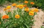 Садовые цветы – названия и подробные описания различных видов