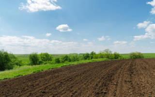 Гуминовые удобрения – как активизировать запасы сил у растений?