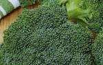 Выращивание брокколи в Сибири