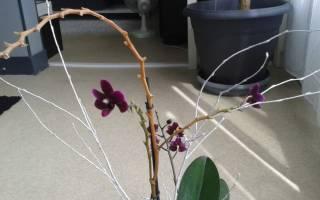 Как обрезать правильно орхидею после цветения