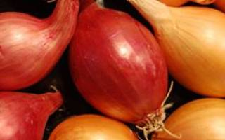 Лук-севок – лучшие сорта отечественной и зарубежной селекции