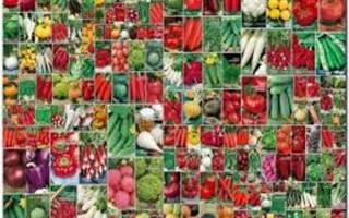 Производители семян цветов в России