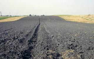 Чернозем, или лучшая земля для растений