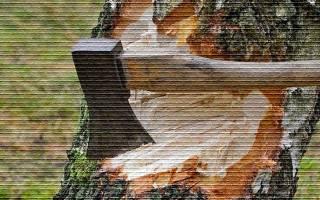 Закон о деревьях на дачных участках