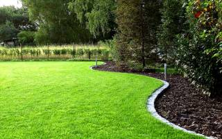 Как посадить газон на даче?