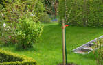 Как правильно сажать саженцы деревьев?