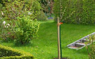 Как правильно посадить саженцы фруктовых деревьев?
