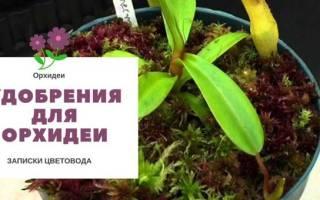 Подкормка орхидей – когда и чем кормить экзотические цветы?