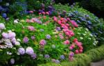 Декоративные кустарники для средней полосы