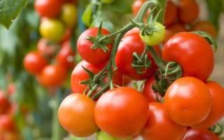 Безрассадные сорта томатов для средней полосы
