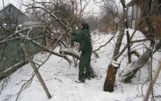 Когда лучше делать обрезку деревьев – оптимальные сроки!