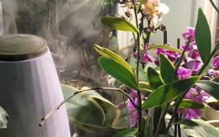 Полив орхидей в домашних условиях во время цветения