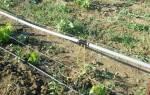Капельный полив винограда – обеспечиваем качественное увлажнение кустарника
