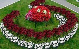 Цветоводство как стиль жизни для увлеченных людей