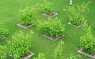 Как разместить растения на дачном участке?