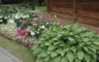 Уличные декоративные растения для дачи – чему отдать предпочтение?