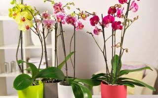 Все про орхидею в домашних условиях